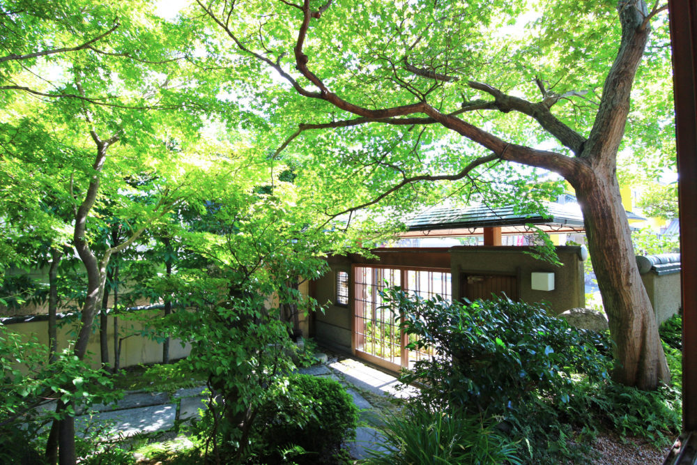 和室、縁側から庭を眺める