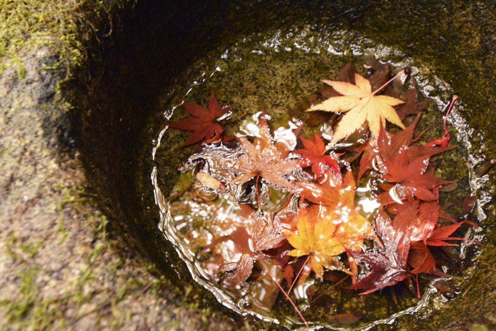 手水鉢に落ちたもみじの葉